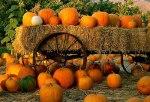 Pumpkin-Patch & Hay Ride